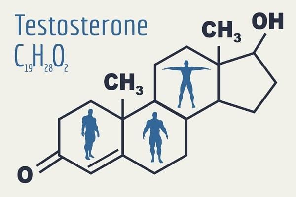 Testosterone có vai trò quan trọng trong quá trình sinh tinh