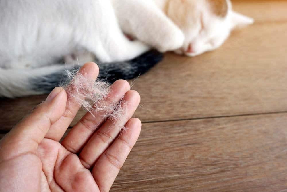 Lông thú nuôi có thể gây viêm kết mạc dị ứng
