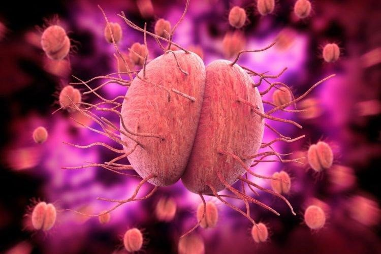 Lậu cầu là nguyên nhân phổ biến gây viêm mào tinh hoàn
