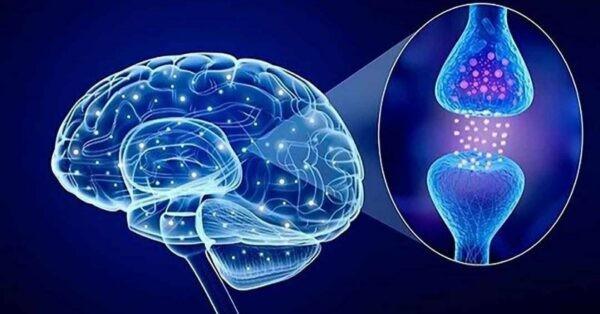 Vai trò của Serotonin trong cơ thể