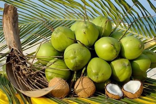 Toàn bộ phận của dừa đều có tác dụng