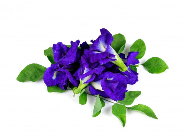 Màu xanh chính là đặc trưng của hoa đậu biếc