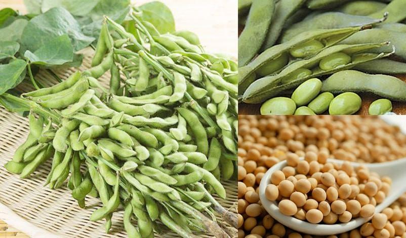 Cây đậu nành cho quả có giá trị dinh dưỡng cao