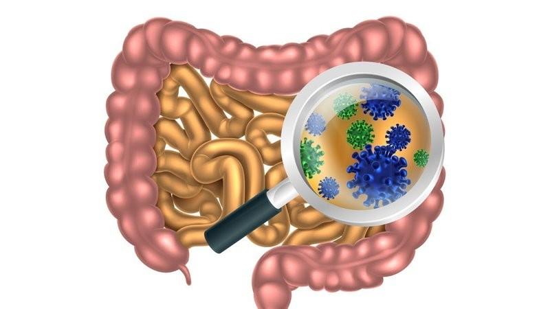 Chất tanin trong trái quách được ứng dụng để điều trị các bệnh nhiễm trùng tiêu hóa