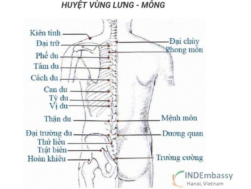 Một số huyệt vùng lưng thường dùng