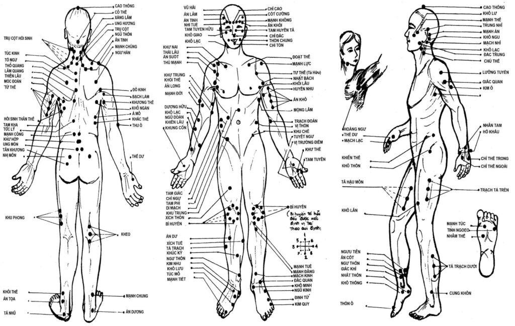 Hệ thống kinh lạc, huyệt vị của cơ thể