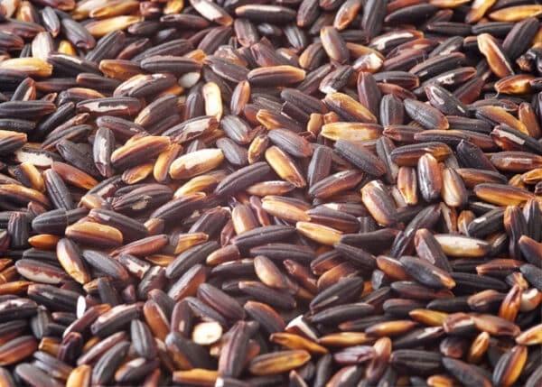 Hạt gạo nếp cẩm tròn, màu sẫm