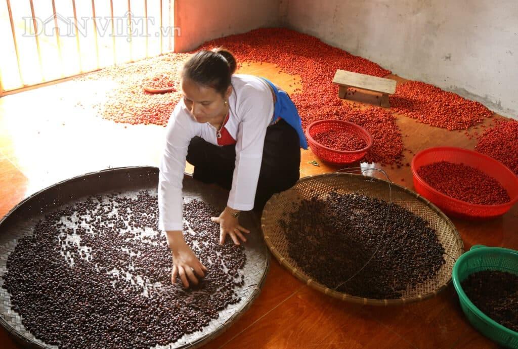 Hạt dổi có màu đỏ đậm, khi phơi khô chuyển dần sang màu nâu đen.