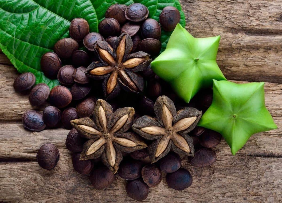 Hạt sachi có nhiều công dụng tốt cho sức khỏe