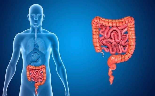 Arecoline trong rễ cau được nghiên cứu là tốt cho đường ruột