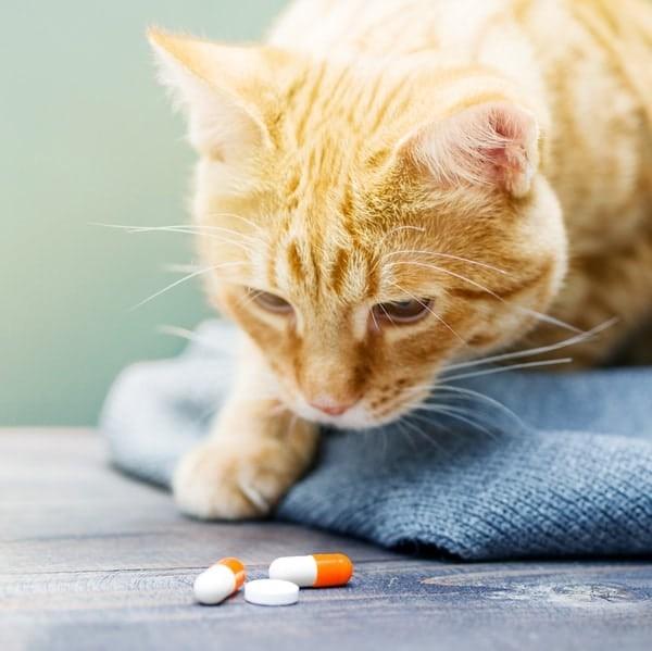Cách xử lý khi dùng thuốc tẩy giun cho vật nuôi quá liều
