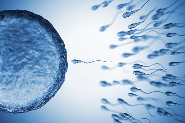 Quá trình thụ tinh diễn ra khi trứng gặp tinh trùng