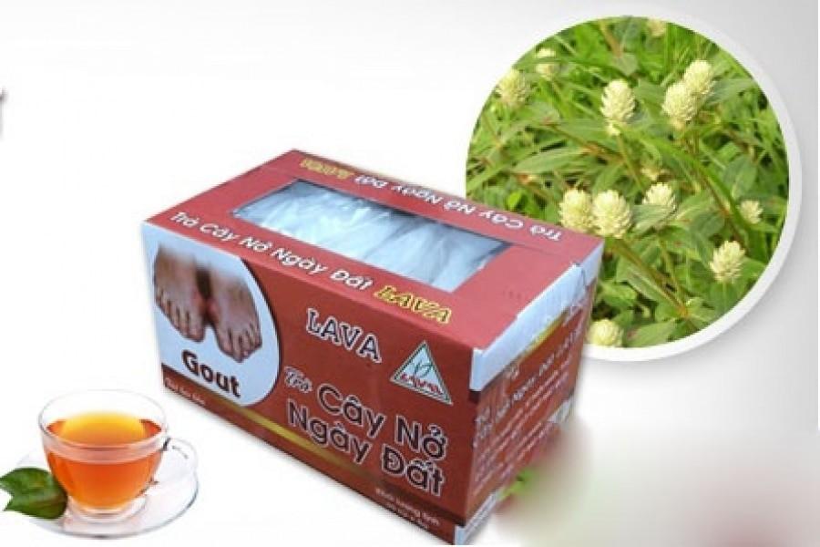 trà từ cây nở ngày đất ổn định huyết áp, lợi tiểu