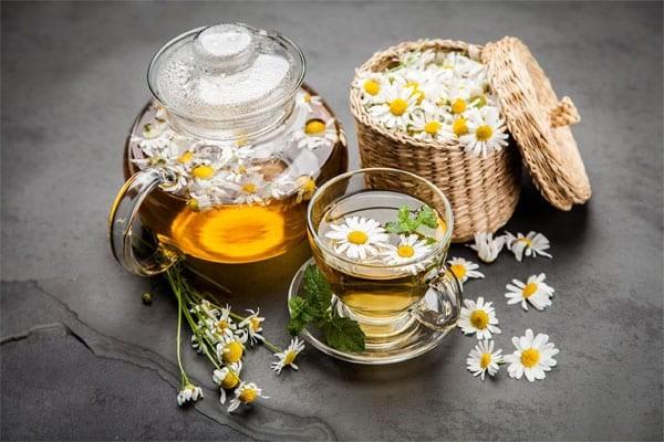 Trà hoa cúc có tác dụng trong điều trị viêm hang vị dạ dày