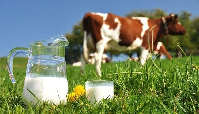 Sữa bò cũng là một loại thực phẩm gây mụn