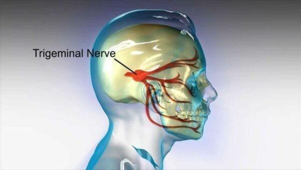 Dây thần kinh số V chia thành 3 nhánh chi phối vận động và cảm giác.
