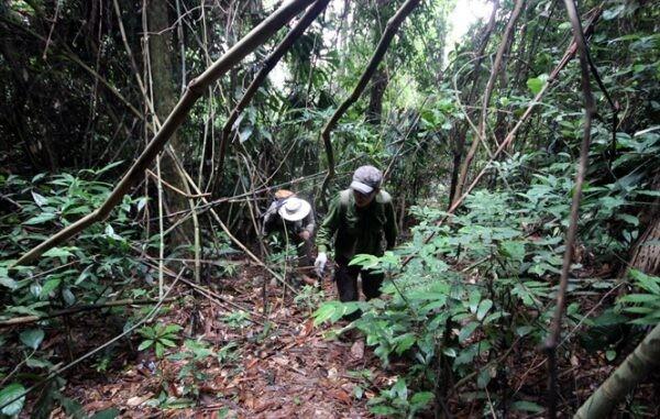 Người dân lên rừng tìm cây mú từn