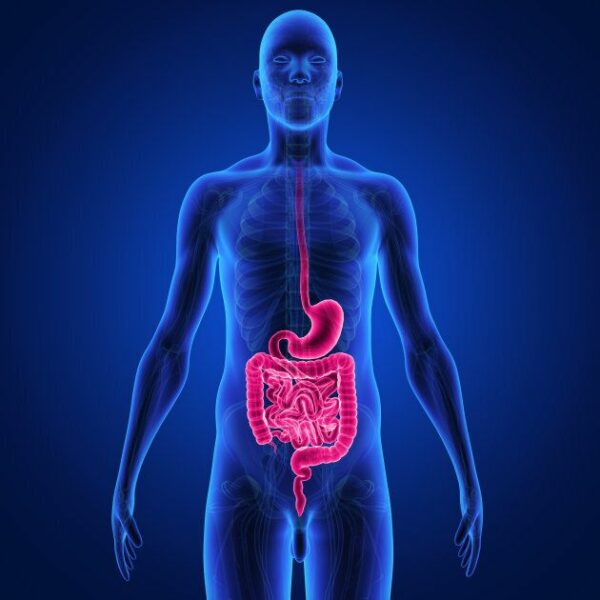 Sự quá tải thực phẩm tại hệ tiêu hóa làm cơ thể khó hấp thụ năng lượng