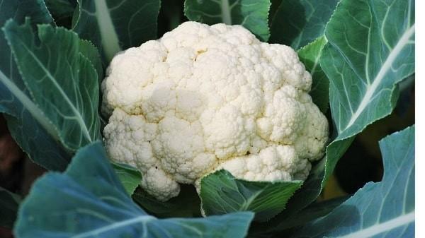 Súp lơ trắng là sự lựa chọn thay thế thông minh cho khoai tây