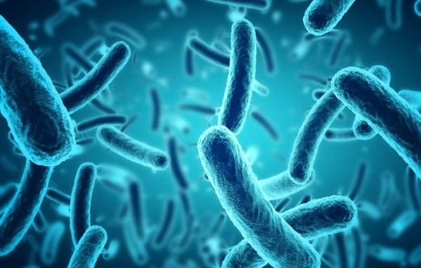 Nguyên nhân bị phong thấp do nhiễm khuẩn.